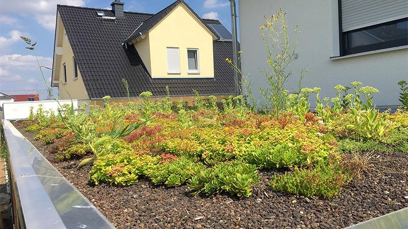Dachbegrünung - mehr Grün am Carport
